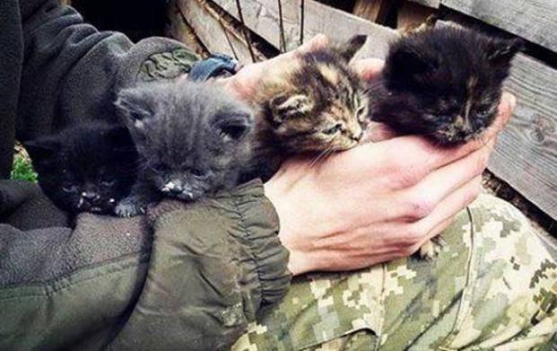 """""""Пушистых, напуганных войной, везут домой"""": Бойцы АТО спасли котят и поразили сеть человечностью (фото)"""