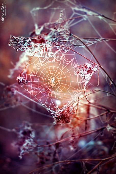 Картинки природы в сказках