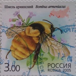 2005 шмель армянский 3