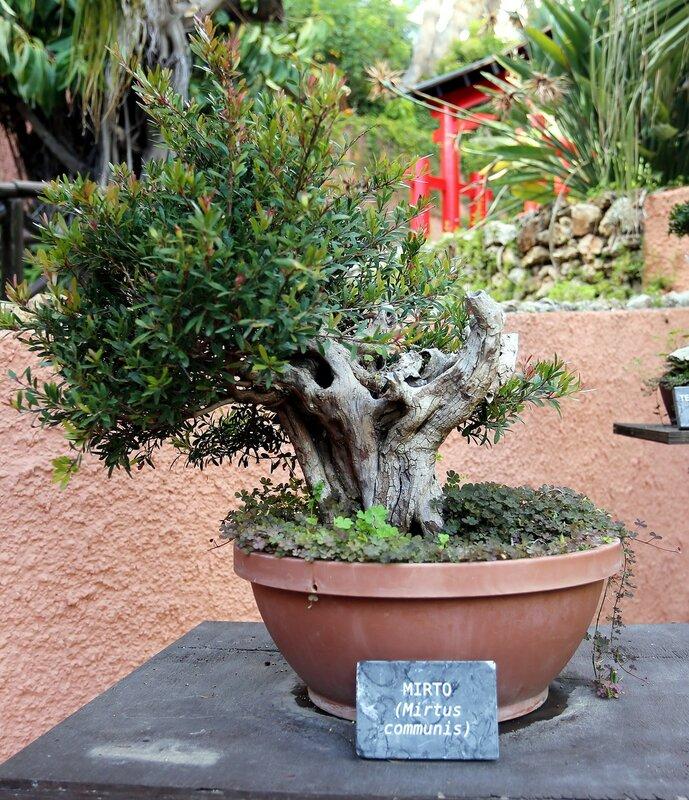 Альмуньекар. Сад-музей карликовых деревьев Бонсай  (Jardín Museo del Bonsái)