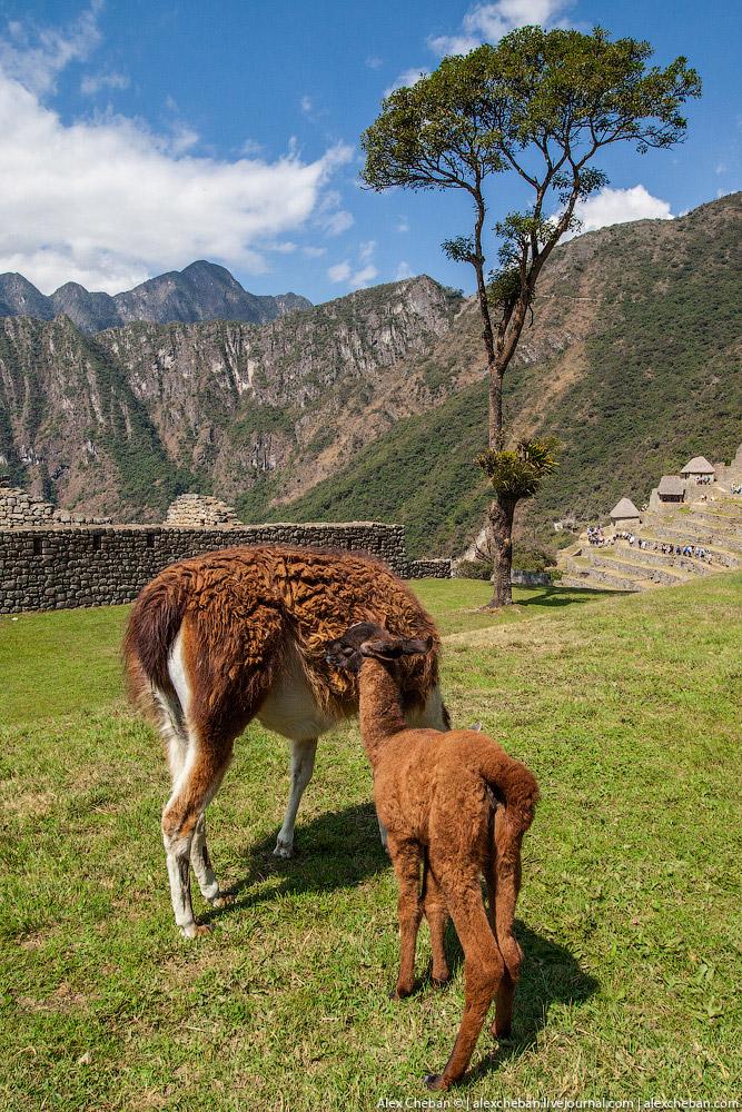 2. Мачу-Пикчу — это город древней Америки, находящийся на территории современного Перу, на вершине г