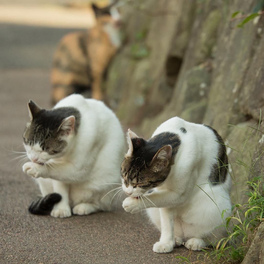 Коты, которые гуляют сами по себе