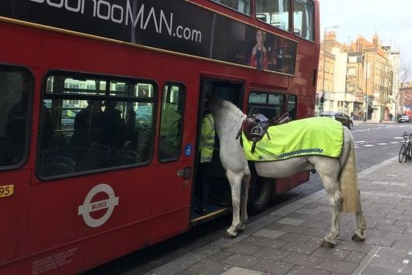 Встолице Англии полицейская лошадь попробовала сесть вавтобус