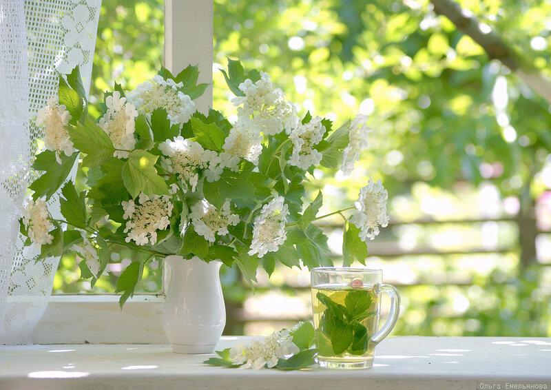 Мятный чай и букет калины