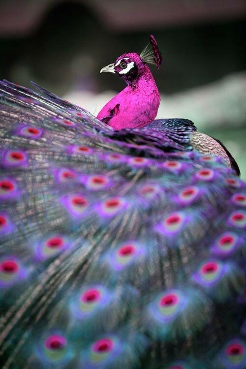 Радужные птицы