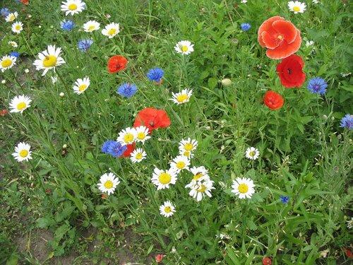Лето цветочное