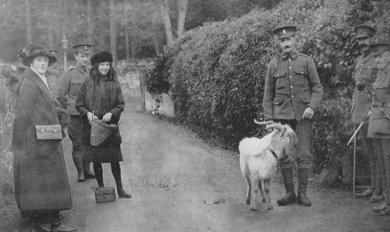 The Goat Presented As A Mascot By His Majesty The King To The 7th Royal Welsh Fusiliers.jpg