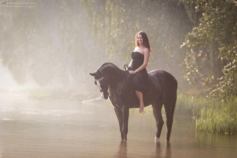 akhal-teke, stallion, анималистика, ахалтекинец, вроная масть, дзержинский, жеребец, карьер, конная фотография, лето, лошади, лошадь, рассвет, утро, фотограф анна володичева, фотография, фотосессия
