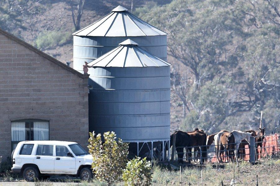 Фермер из Австралии заморил голодом 23 лошадей