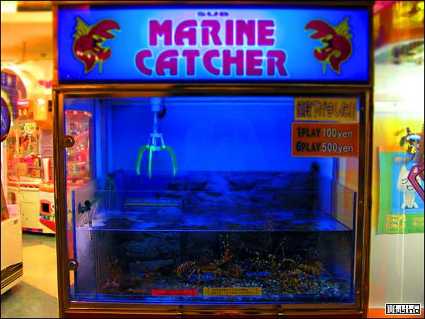 Японский автомат с живыми омарами