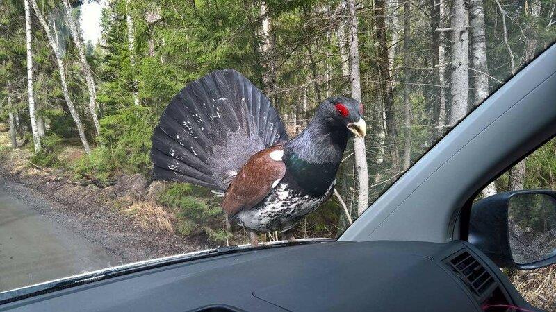 Кого только не встретишь на лесных дорогах.