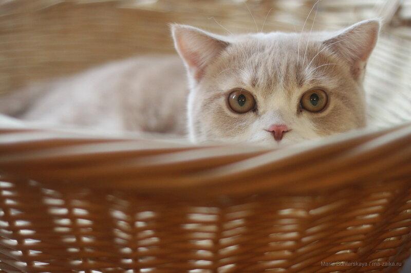 MathCat, Саратов, кафе 'Cats', 11 ноября 2016 года