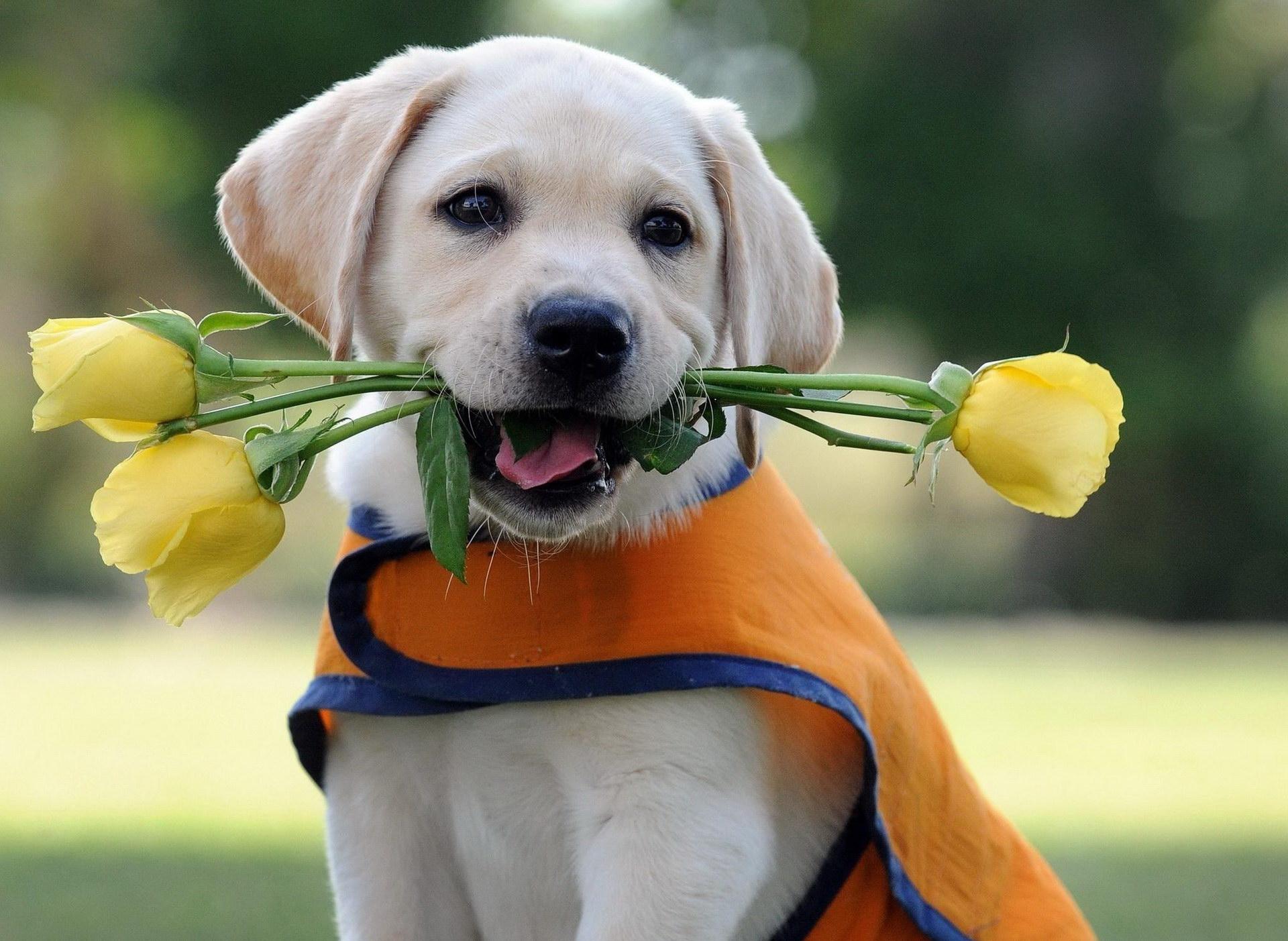 Квіти для господині