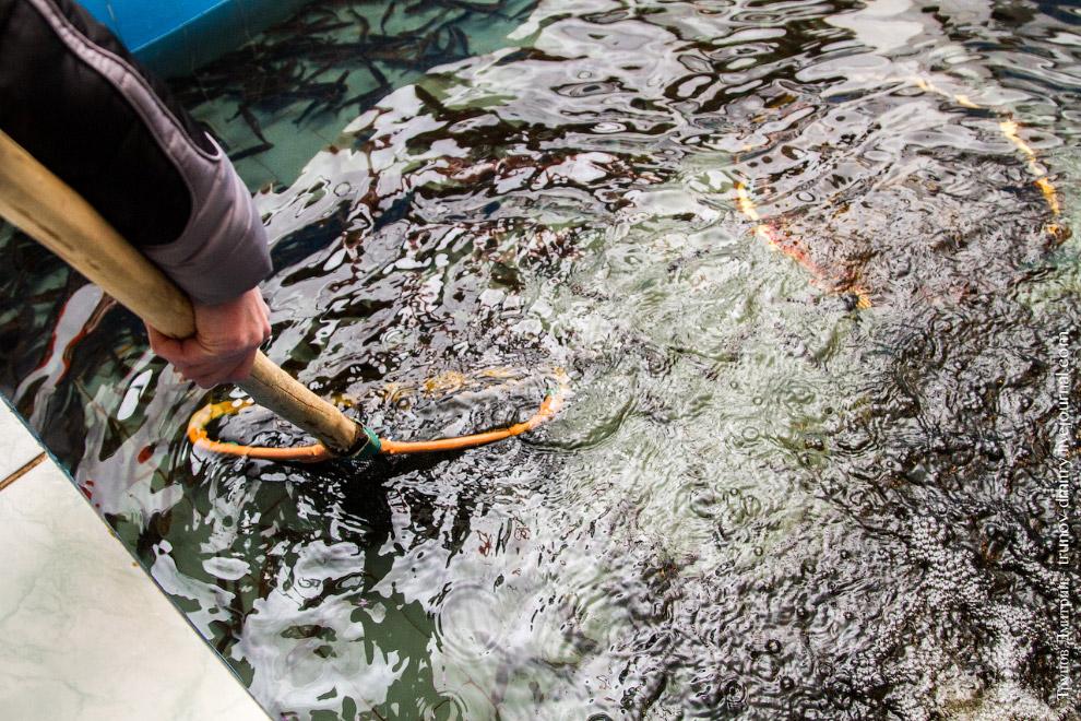 22. Для каждого вида рыб имеется специальный инвентарь.