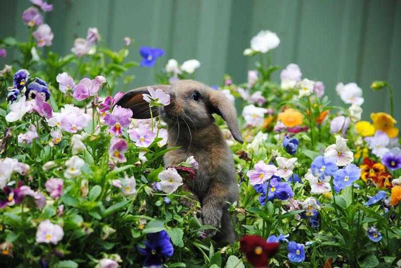 Животные, которые любят вдыхать аромат цветов (15 фото)