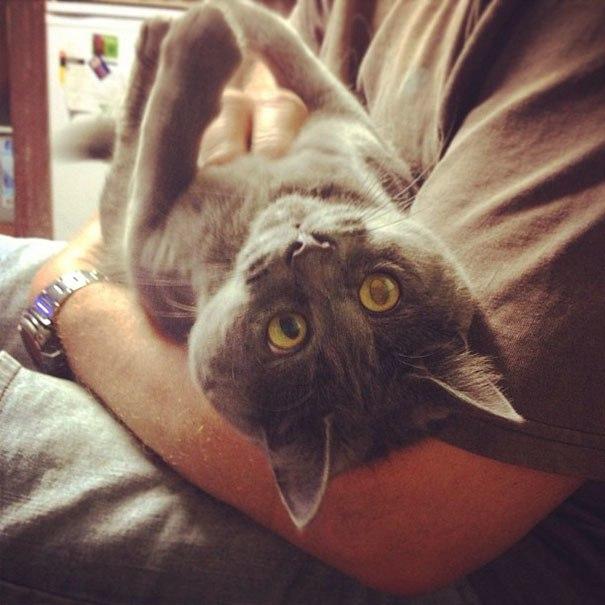 """Этот постоянно """"удивленный"""" кот не должен был выжить, но сейчас ему 4 года"""