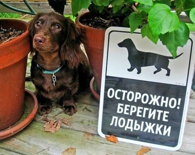 © thewisdomjournal.com  Эта собака подает достойный пример всем сторожевым псам