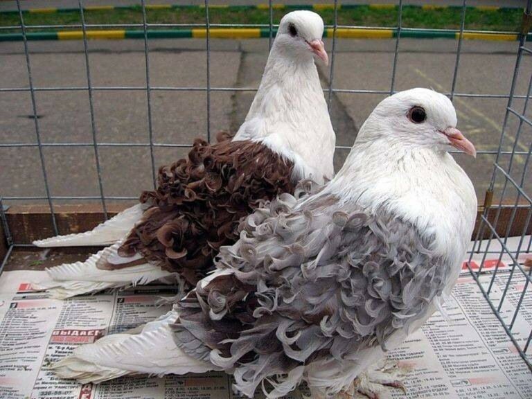 Фото-голубей-768x576.jpg