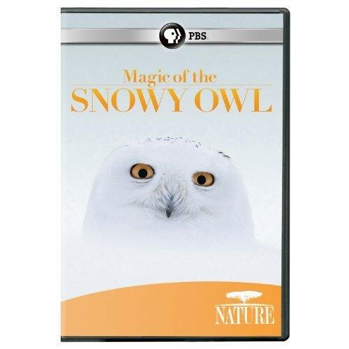 Magic of the snowy owl.jpg