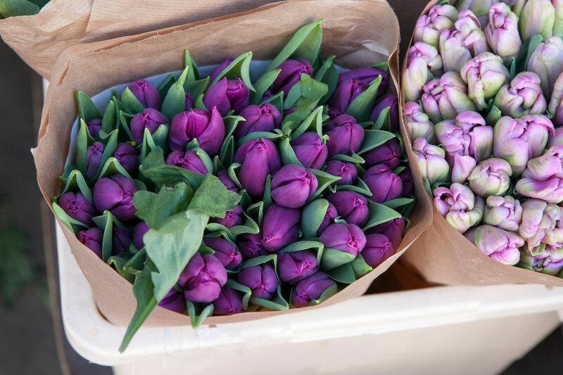 violet tulips in craft paper