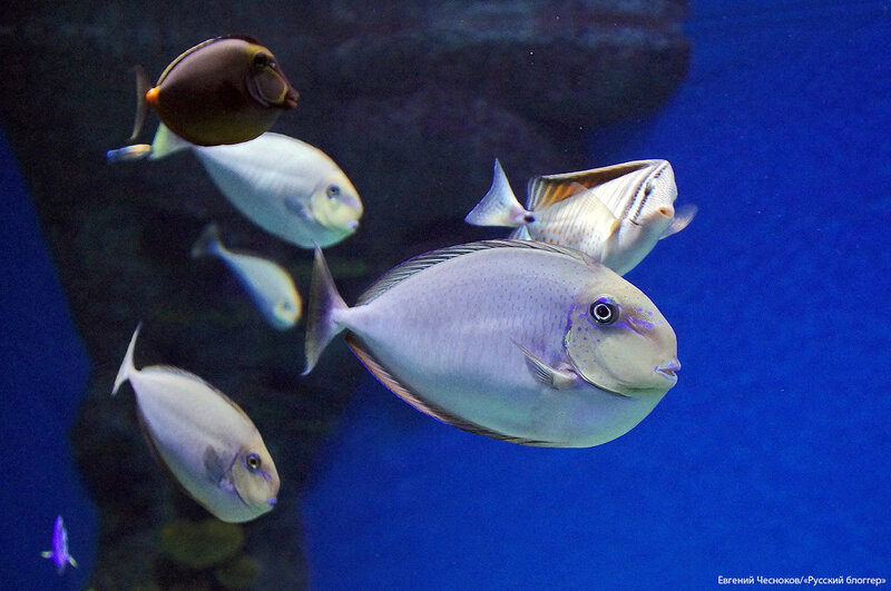 Зима. Москвариум. аквариум. 09.12.16.08..jpg