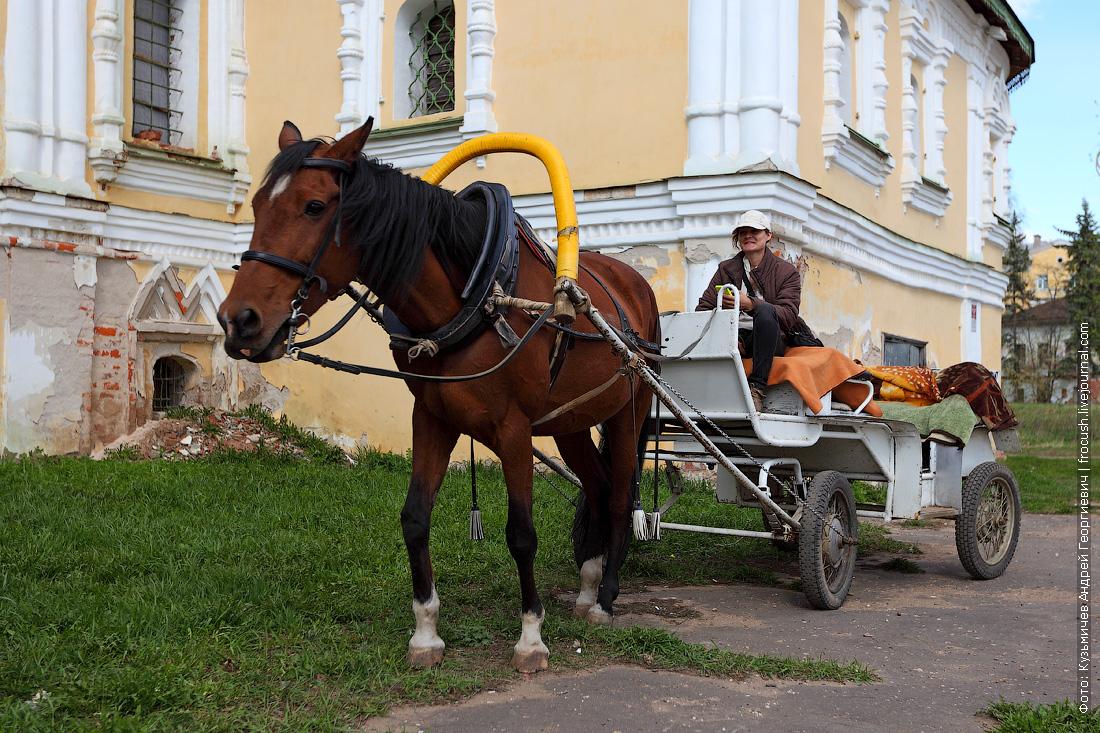коневладелец