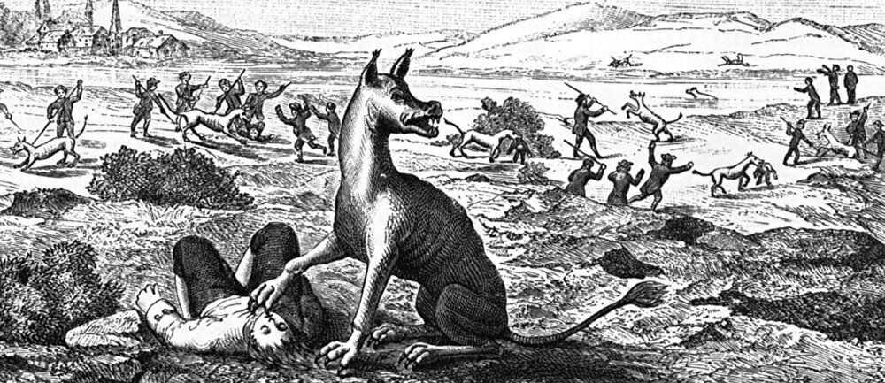Beast of Gévaudan,, 1765 engraving.jpg