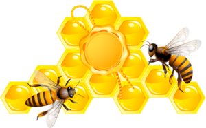 Honeycombs and bees