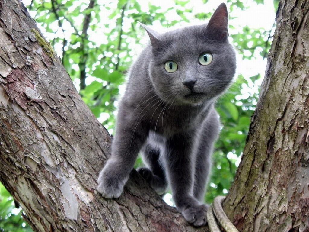 На дереві