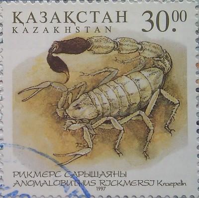 1997 № 192 скорпион Фауна Казахстана Ядовитые насекомые пустыни 30