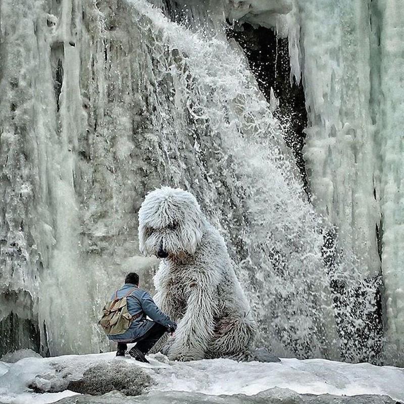 Таяние льда Схожесть тающего льда и лохматого белого пса.