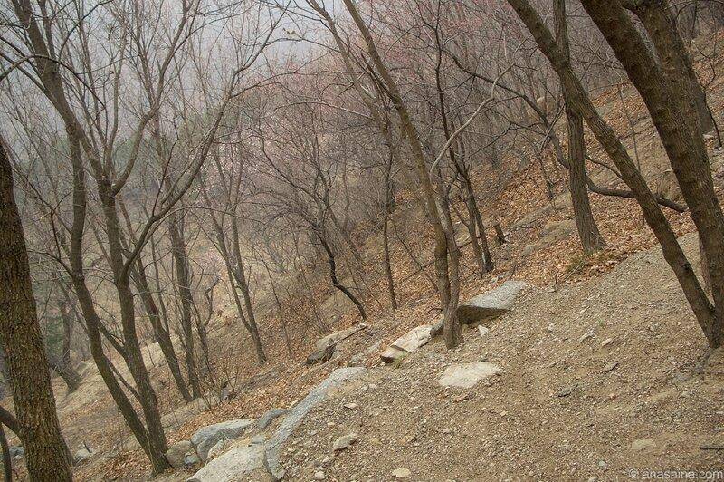 Деревья на горном склоне, Мутяньюй