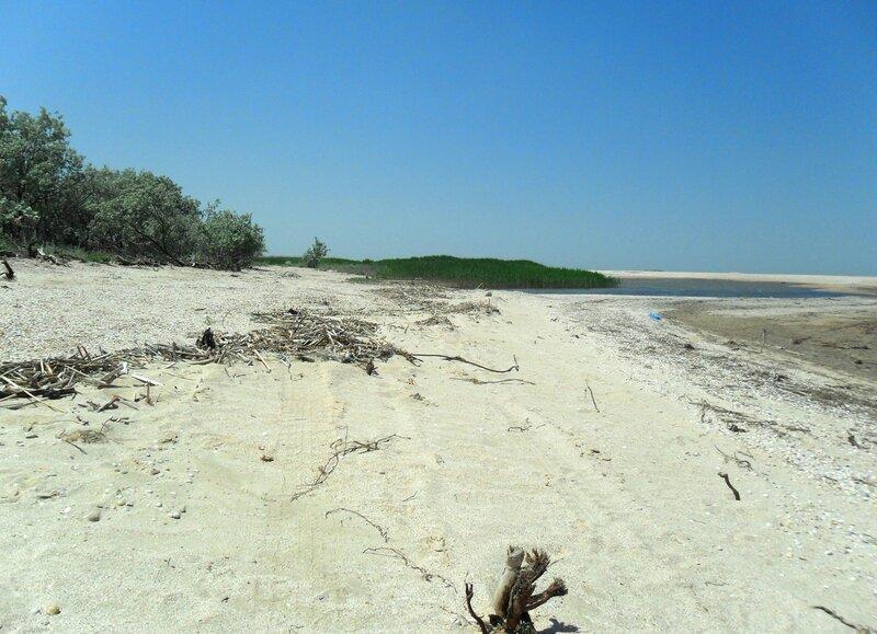 На песках приморских ... SAM_8865.JPG