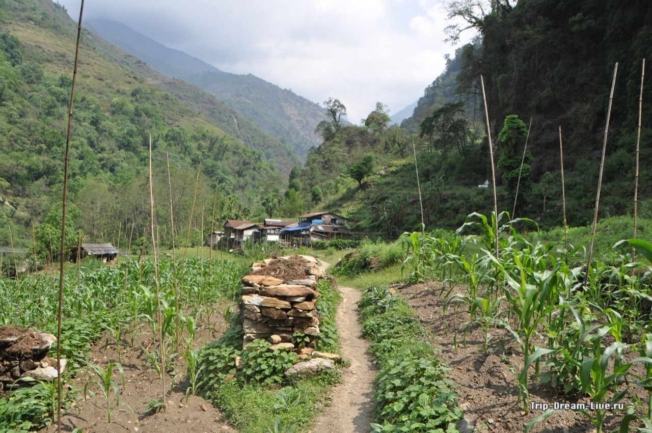 Показалась деревушка Хималпани