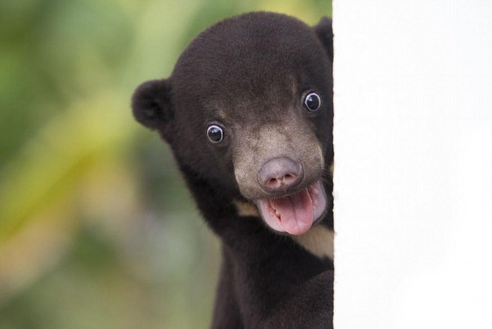 Первая фотосессия медвежонка