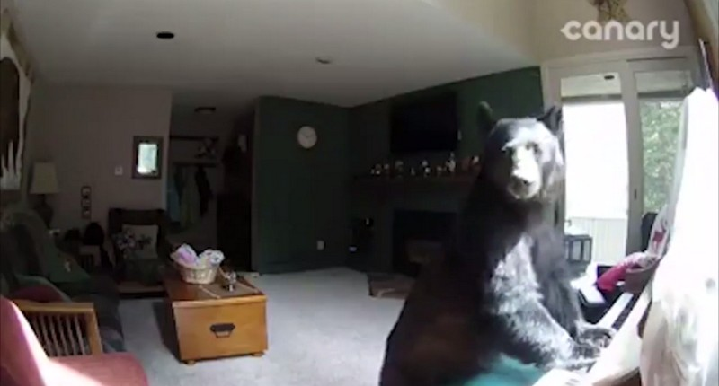 The bear climbed into the house and played the piano