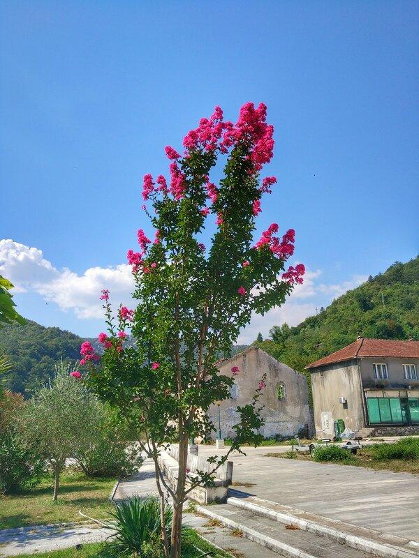 Каруч, Скадарское озеро