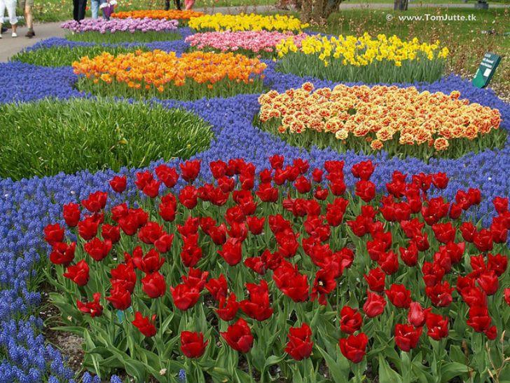 Вы просто не можете пройти мимо тюльпанов, потому что это самые нежные цветы на свете.
