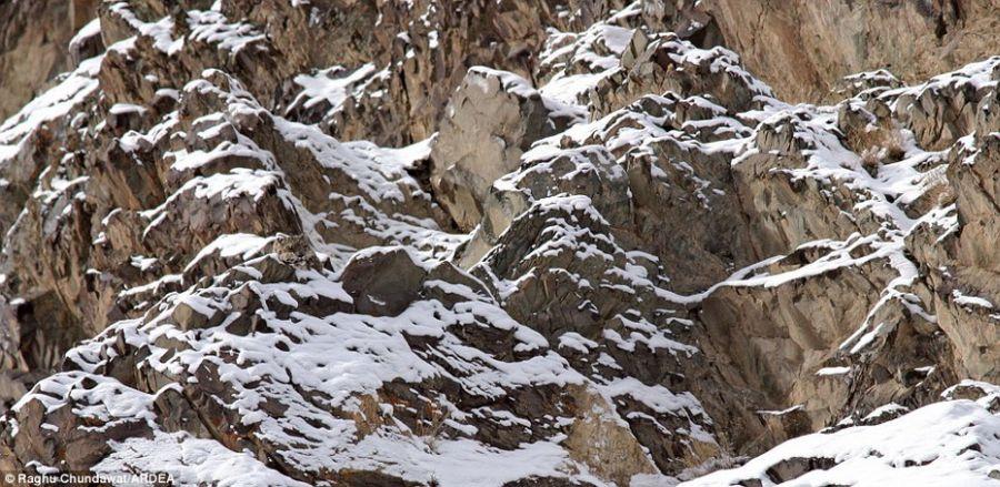 Пяденица на скале