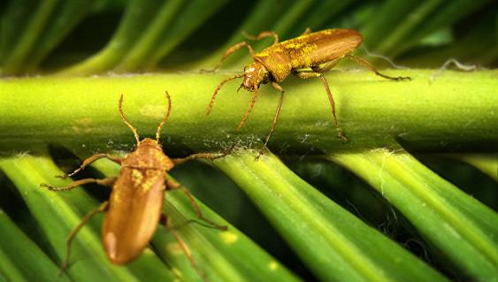 В Российской Федерации ученые создали антибиотик изличинок мух