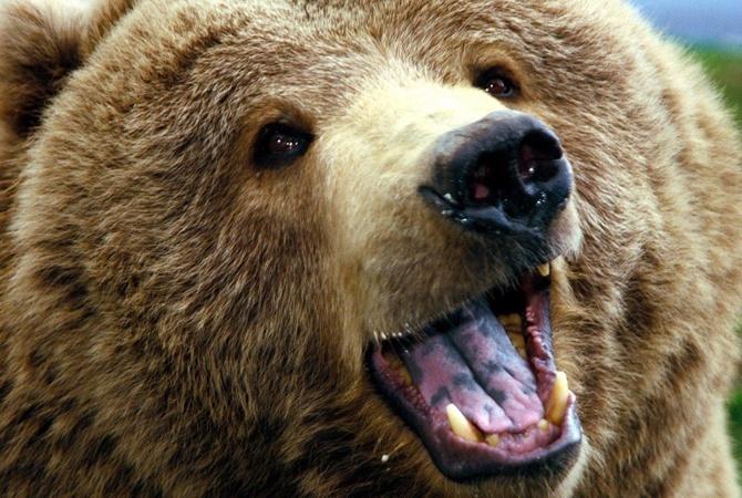 Медведь набросился налюдей вовремя циркового представления вУкраинском государстве