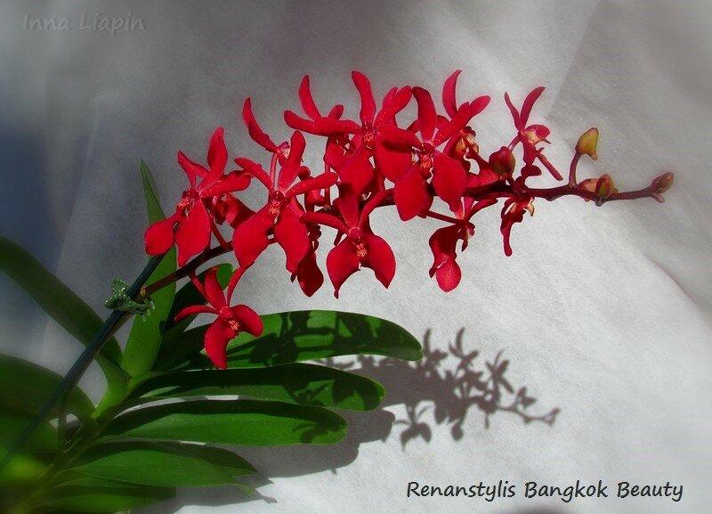 Renanstylis Bangkok Beauty
