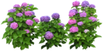 растение