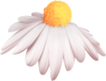 StrawberriesDesigns_TouchMyHeart_element_68.png