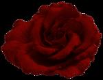 «p.s-iloveyou» 0_7d51c_6dd50218_S