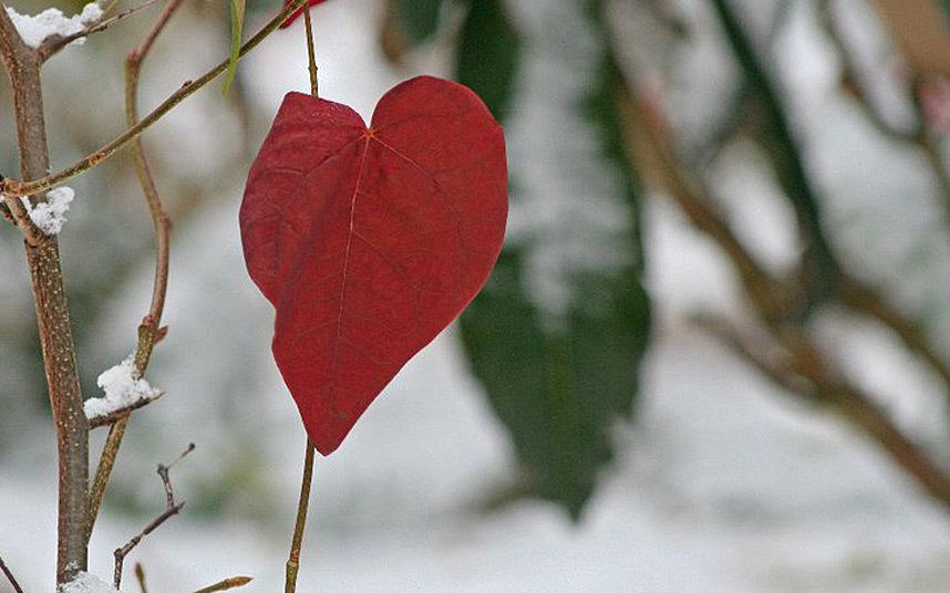 Все, что вам нужно, это любовь