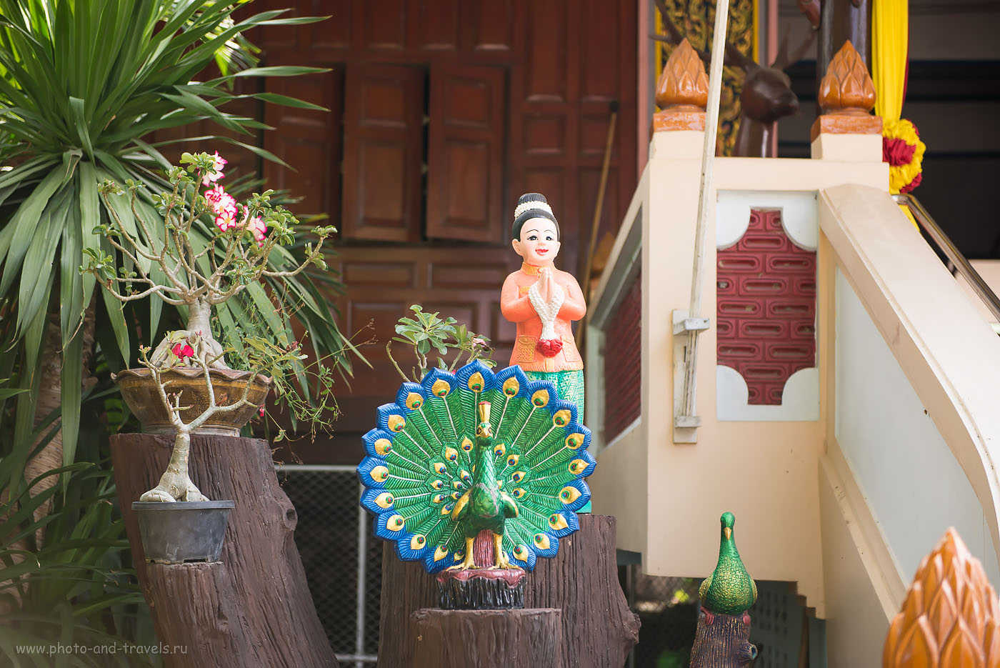 Фотография 17. Павлин-мавлин. Достопримечательности недалеко от Хуахина. Отдых в Таиланде дикарем. Отзывы туристов.