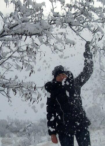Струсить снег с дерева