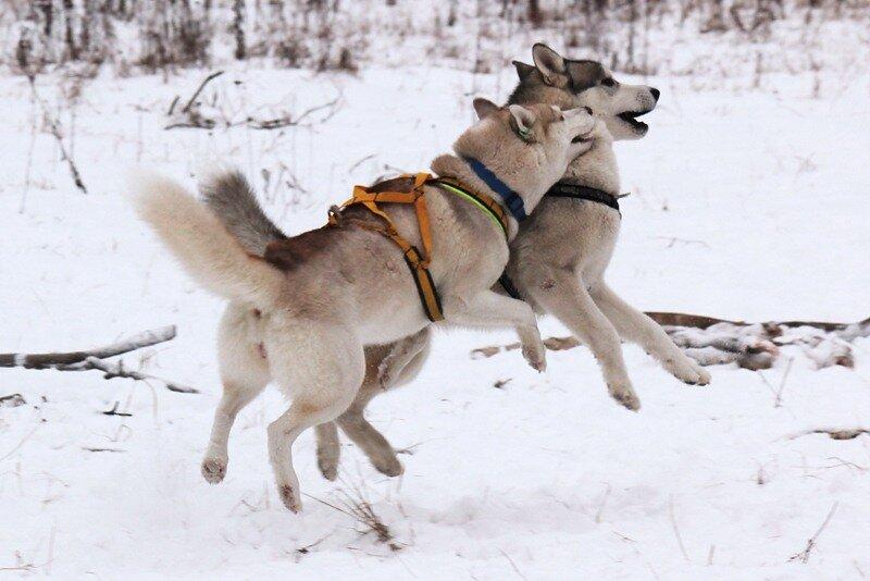 http://img-fotki.yandex.ru/get/5600/deingel.7/0_594f3_7578f369_XL.jpg
