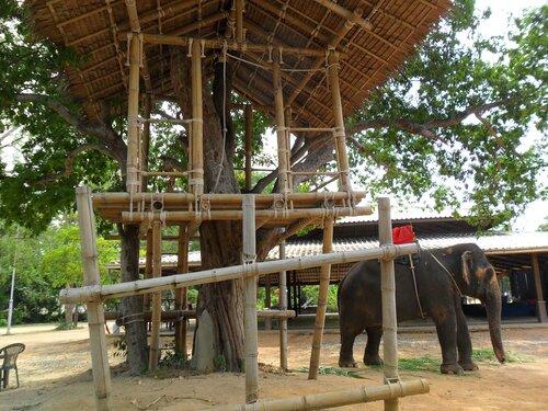 какие экскурсии в тайланде